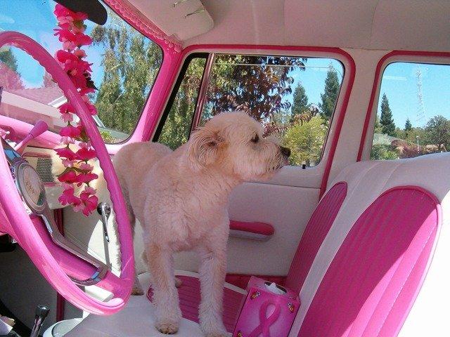 holčičí růžový auto