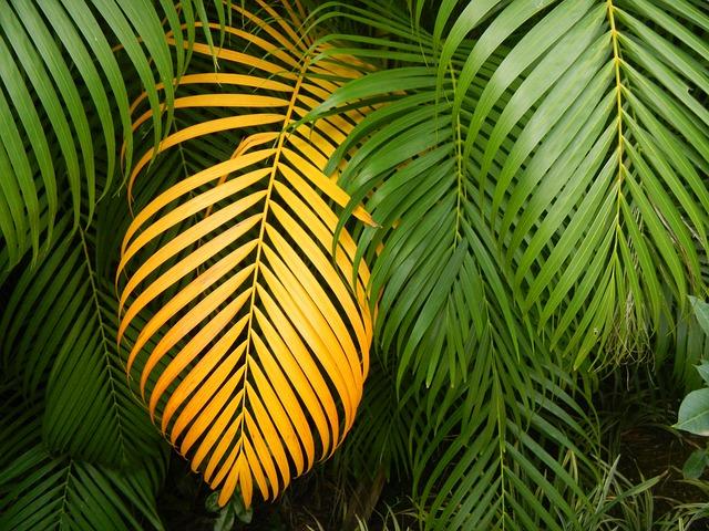 tropické listy